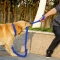 Pet Adjustable Nylon Dog Rope Slip Training Walking Leash Pet Collar Traction Rope for Large Dogs blue,L