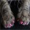 20 Pcs / Set Colorful Pet Nail Sets Catlike Sets Dog Cat Armor Products random color-XS 99