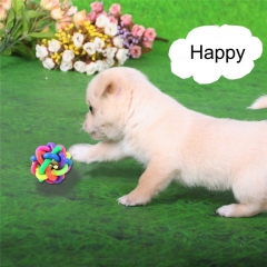Happy Pet Cat Dog Toy Colorful Bells Weave the Ball Colorful Ball Twist Ball 1PCS diameter 6cm