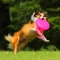 Pet Dog Frisbee Flying Disc Tooth Resistant Outdoor Dog Training Fetch Toy Color Random 2pc random color diameter 16.5cm