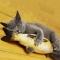 Catnip Toys Simulation Plush Fish Carp Shape Doll Interactive Pets Pillow Chew Bite Supplies Carassius auratus-M 20X8CM