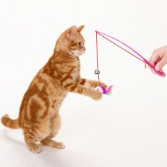 Feather Toy Wand Teaser Wand Cat Toys Interactive Retractable Wand Rod