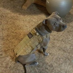 Tactical Outdoor Military Dog Clothes Load Bearing Training Vest Harness