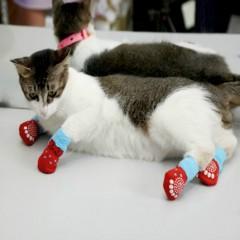 Cute Pattern Pet Socks Soft Pure Cotton Dogs Cats Socks Indoor Floor Socks