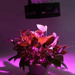 96W ( True 48W ) COB Full Spectrum LED Grow Light  BLACK UK PLUG