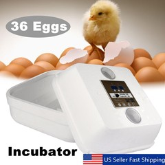 36 Egg Automatic Digital Incubator Chicken Poultry Multicolor Normal