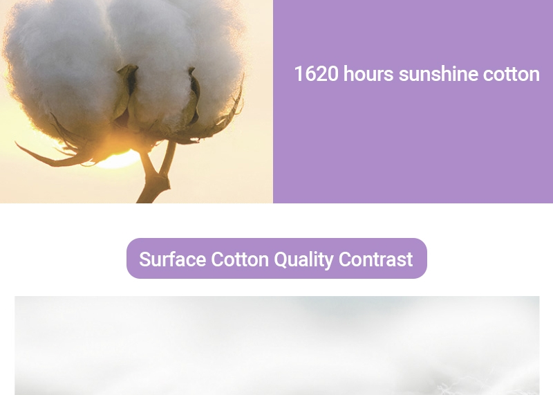 Softcare Sanitary Pad Breathable Cotton 285mm-10 Pads per Packet purple 4