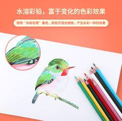 High quality Color Pencil School Student Children Color Lead Brush Set Stationery 12/24 Color blue 12 color